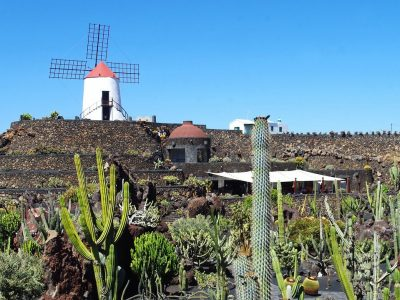 Things-to-do-in-lanzarote-Cactus-Garden-1