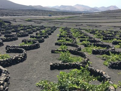 Things-to-do-in-lanzarote-La-Geria-the-volcanic-wine-region-1